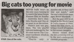 Big Cats Too Young For Party